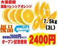 【大浦農園】≪優品≫国産バレンシアオレンジ7.5kg(3L)