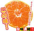 【送料無料】【大浦農園】≪秀優混合≫温州みかん5kg(SS)※小さいサイズです。[前予約:11月中旬頃~12月にかけて発送]