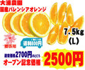【大浦農園】≪秀品≫国産バレンシアオレンジ7.5kg(L)