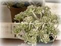 *natural*多肉植物*ミニセダム造花