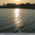 中村ジョー / 『Blue Box』 (ROSE 33/CD ALBUM)