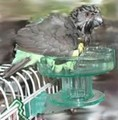 Bird Bath★バードバス