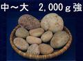 姫川薬石【お手軽セット】      2,000g