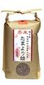 種子島産 『赤米』たまより姫うるち玄米300g