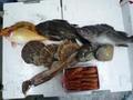 定期購入鮮魚セット5000