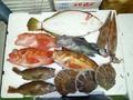 鮮魚セット10000