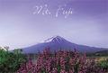 初夏の富士山 ① ポストカード