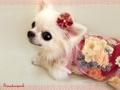 菊と牡丹の和柄タンク 紅色 *髪飾り付き*