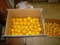 お得柚子 ほぼキズ無し 1箱 約10kg入り