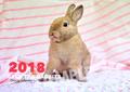 《送料無料》SAVE THE RABBITS チャリティーカレンダー2018(壁掛け)