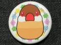 文鳥缶バッチ シナモン