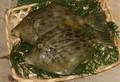 かわはぎ(天然)中 約1kg (3~5尾)