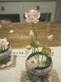 大賀ハスミニ睡蓮鉢