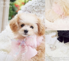 Ice chou-chou Fairy(アイスシュシュフェアリー)♪☆Pink Fairy(ピンクフェアリー)☆