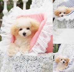 Ice Le Lit mini(アイスレリットミニ)♪☆Coral/Ice Gray/Border/Snow White☆