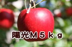 陽光 M 5kg