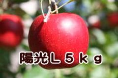 陽光 L 5kg