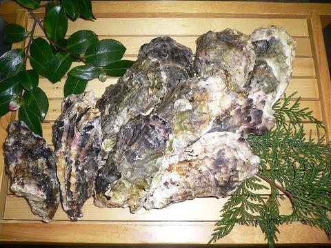 安芸津産 牡蠣 から付き牡蠣20個