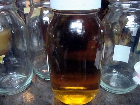 ツルニンジン酒 天然物 送料無料 900ml 酒のみの濾した物
