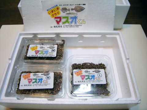 いきいきゴカイ マスオくん(3600円セット)[M003]
