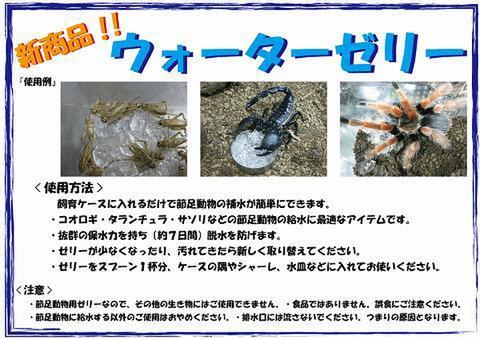 昆虫の保水ゼリー【ウォーターゼリー】