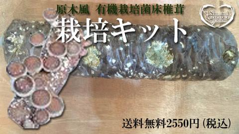 有機菌床椎茸農家の菌床