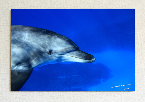 Smily Dolphin #001