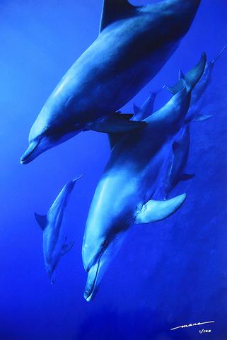 The Bonin Dolphins #004