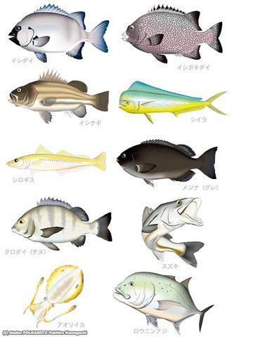 アングラーセット 魚イラスト10点セット Adobe Ai形式/ (CMYK)