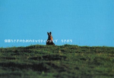 ポストカード【L】~村川荘兵衛~スコットランドのうさぎ