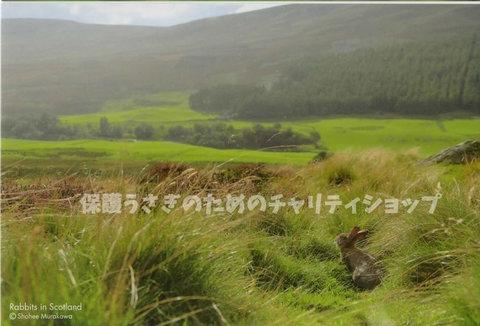 ポストカード【F】村川荘兵衛スコットランドのうさぎ